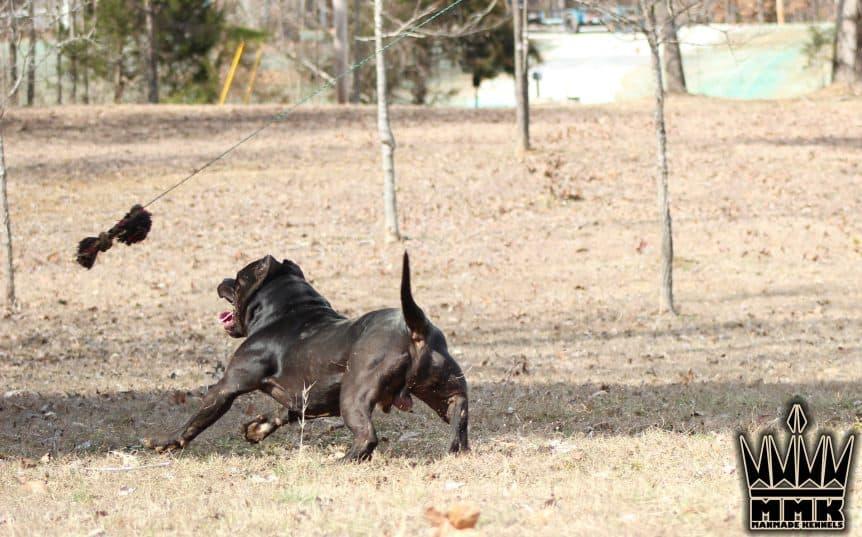 the riddick running