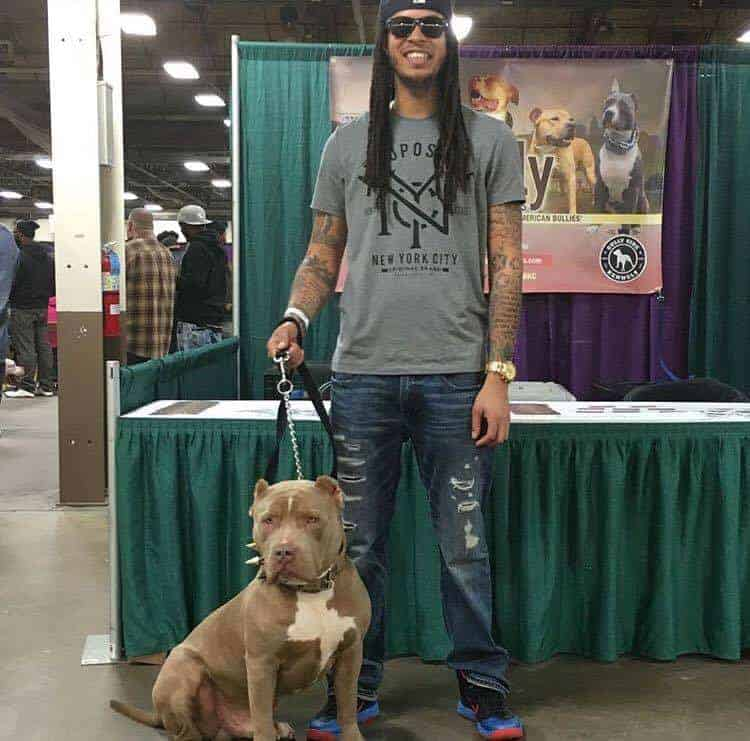 PROTECTION DOG PITBULL