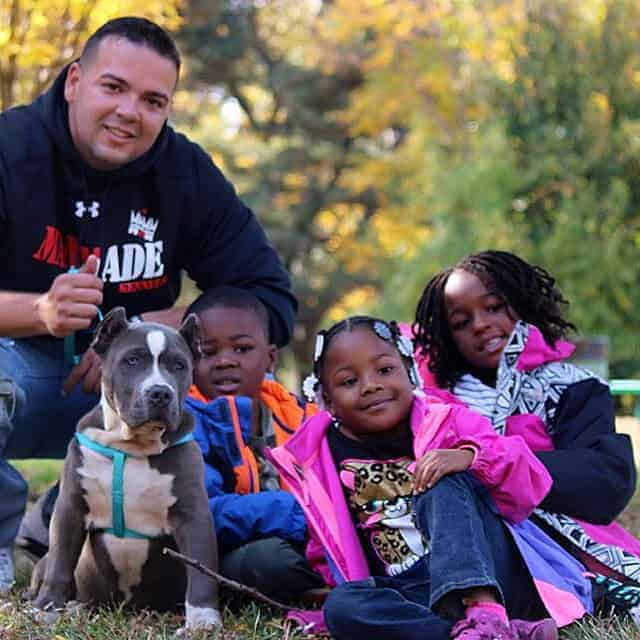 XL AMERICAN PIT BULL TERRIER PUPPIES FOR SALE