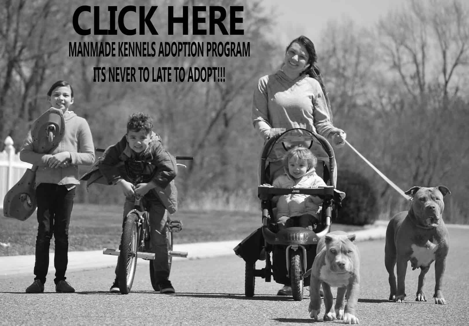 american Pitbull terrier ADOPTION PROGRAM