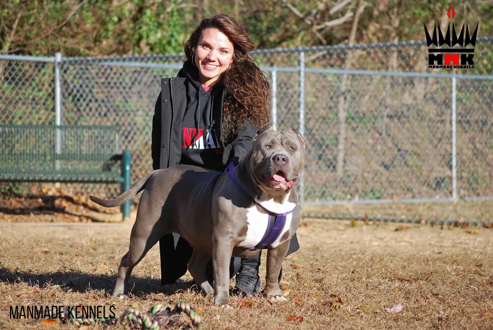 Bluenose pitbull puppies for sale